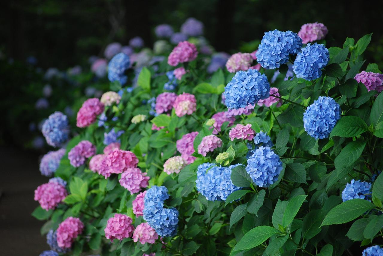 flores jardim de sol : flores jardim de sol:jardim? Saiba quais plantas escolher de acordo com a incidência de